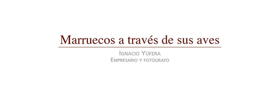 marruecos_aves3